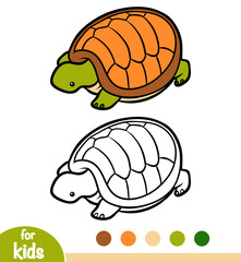 Coloring book, Tortoise