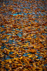 Fall leaves lie on a road