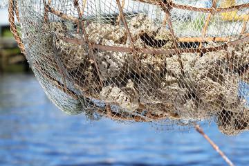 Close up of natural sea sponges hanging in a net at Tarpon Springs, Florida, USA.
