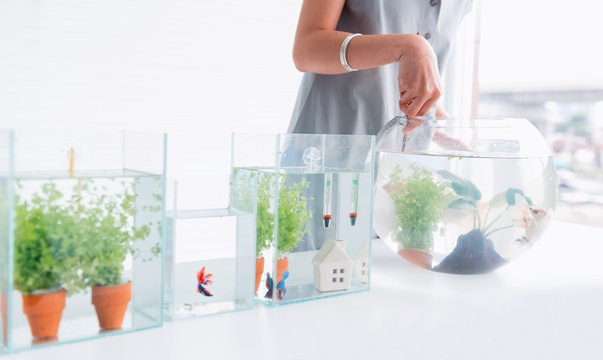 Aquarium for pet and hobby at home. Catching fish to new bowl.