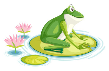 A frog on the lily pad