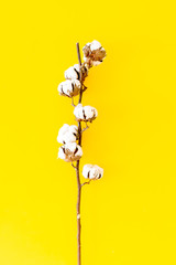 White dried flowers of cotton on yellow background top view space for text