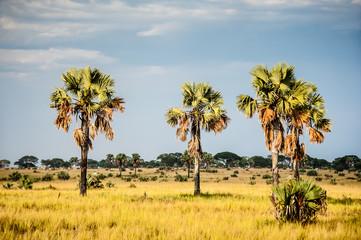 Paesaggio Uganda, africa