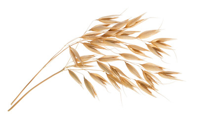 Photo sur cadre textile Graine, aromate Oat plant isolated on white without shadow