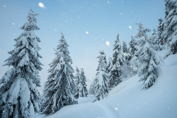 Wall Mural - Snowy Christmas landscape with snowfall