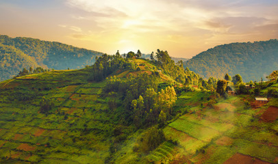 Landscape in southwestern Uganda, at the Bwindi Impenetrable Forest National Park, at the borders of Uganda, Congo and Rwanda. The Bwindi National Park is the home of the mountain gorillas. Wall mural