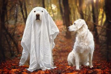 Hund sitzt als Gespenst verkleidet neben anderem Hund