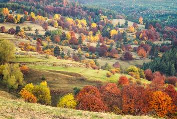 Amazing autumn view with horses on a meadow in the Rhodope Mountains, Bulgaria