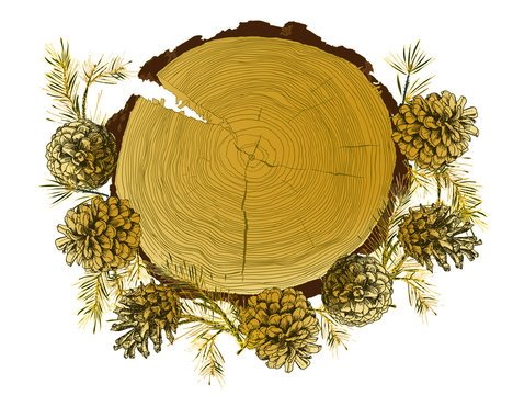 Card template with realistic botanical ink sketch of fir tree branches, gold pinecone and tree ringg trunk on white background