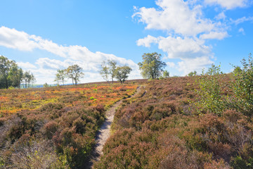 Path over the moors