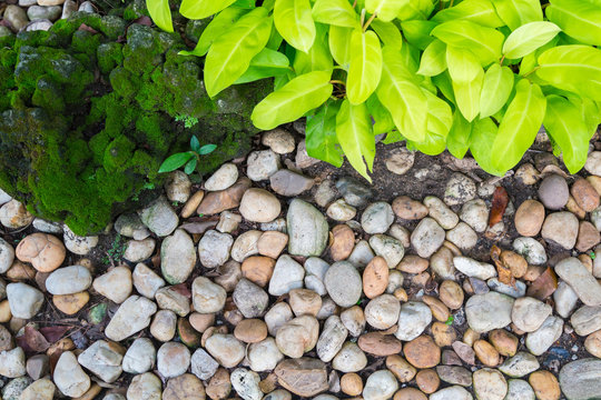 Beautiful rock garden. Green ornamental and Stone covered with green moss.
