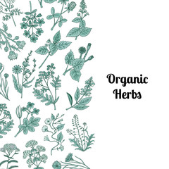 Vector hand drawn medical herbs background with place for text illustration