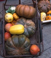 squash and pumpkins vintage composition