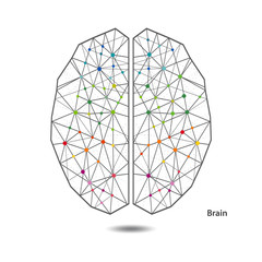 Creative color concept of the human brain.