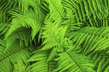 Green fern natural background