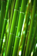 Deurstickers Bamboo Close-Up of Bamboo Stems