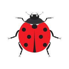 Cute ladybug. Insect beetle