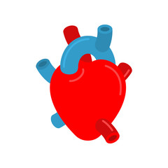 Anatomical heart isolated. Ventricles and atria. Aorta and veins