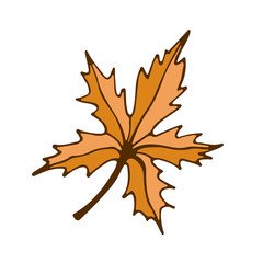 Maple leaf icon. Hand drawn print. Sticker vector design.