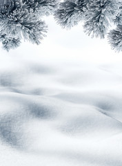 Snow hills and twigs of spruce tree for winter or Christmas background