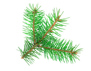 Fir tree branch isolated on a white background close-up. Top view