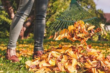 Raking fallen leaves in garden at autumn