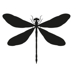 dragonfly   vector illustration    black silhouette  front