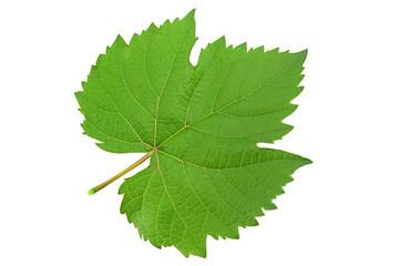 Grape fresh leaf closeup
