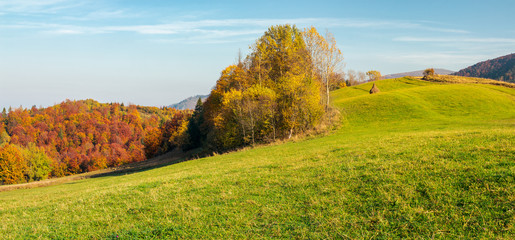 panorama of forest on grassy hill in autumn. beautiful rural scenery of mountainous countryside in sunny october weather