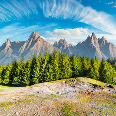 composite image of High Tatra mountains. spruce forest in front and gorgeous blue sky above. beautiful travel destination