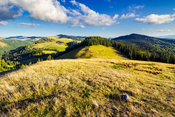 mountainous early autumn landscape in evening light. beautiful view from the grassy meadow on hill. location Romania, Apuseni Natural Park