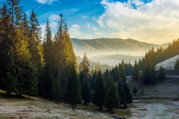 wonderful autumn morning with gorgeous sky above the spruce forest and fog in distant valley. amazing landscape in mountains.