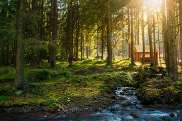 sunny coniferous forest in autumn evening. small brook in foreground and wooden shed in the distance