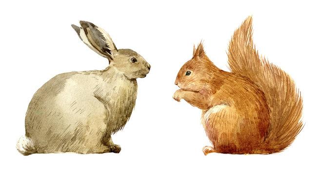 Watercolor rabbit and squirrel set