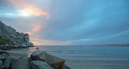 Seagull at Sunset at Morro Rock on the central coast of California at Morro Bay California United States