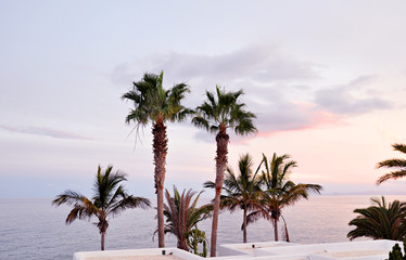 Tropical sunset sky at a beach resort. A group of palm trees against a sunset sky. Natural photo. Concept of calm and relax.