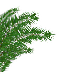 Simple Leaf Of Palm On White Background