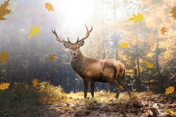 Stolzer Hirsch im herbstlichen Wald bei Lichteinfall