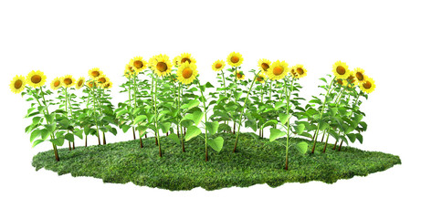 sunflowers with grass 3D illustration