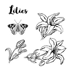Ink sketch hand drawn set lilies flowers. Sketching vector flowers illustration isolated on white background.