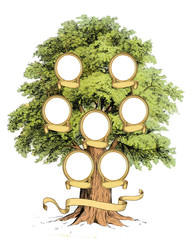 Family Tree template vintage illustration. High resolution print.