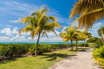 Palms at a coast of Caye Caulker island, Belize