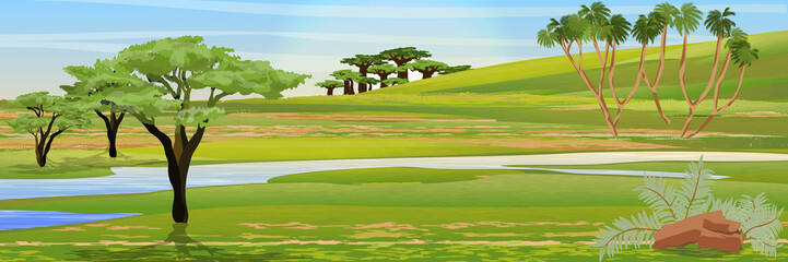 African savannah. Realistic vector landscape. The nature of Africa. Acacia, doom palm trees and baobabs. Reserves and national parks.