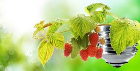 gardening raspberries garden on green energy