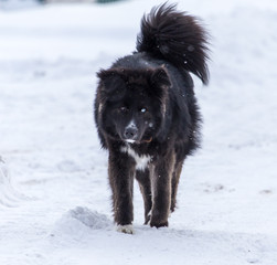 Black dog on white snow in winter