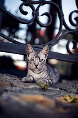 striped cat laying on stone floor near a fence with a lattice