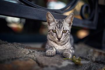beautiful bright striped street cat laying
