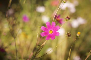цветы осенние растут в солнечный день