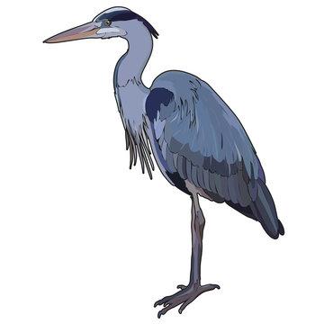 Vector heron