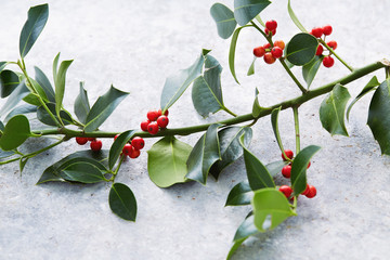 Wall Mural - Christmas decorations, holly leaves with red berries.
